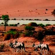 Namibia safari holidays - Longhaul holidays from Escape Worldwide