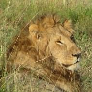 Special offers for holidays to Africa including safari holidays - Longhaul holidays from Escape Worldwide